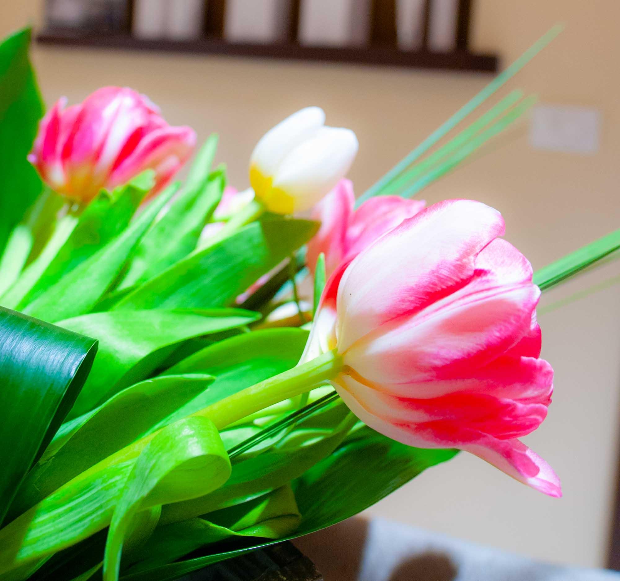 estetica harmony zocca fiori